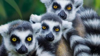 12199_banner_Lamina_rompe_1000_pzas_Lemur